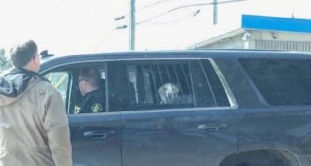 perro-detenido-